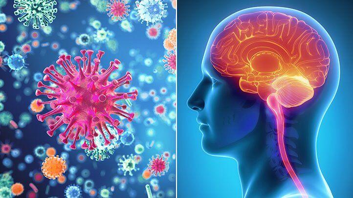 چه ویروسهایی میتوانند منجر به مننژیت شوند؟