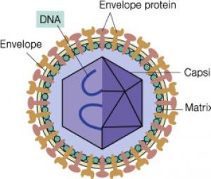 ساختار ویروس ها
