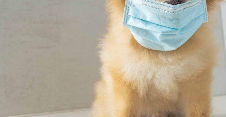 حیوانات خانگی و ویروس کرونا