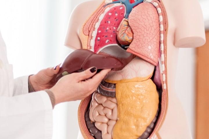 درمان کبد چرب گرید 2 با طب سنتی