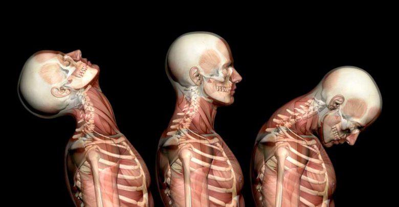 آناتومی چیست و مطالعه آن در چه علومی کاربرد دارد