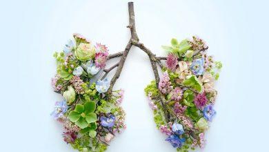 گاهی سیستم ایمنی بدن در برابر آلرژنها واکنش نشان خواهد داد. هنگامی که بدن به این مواد واکنش نشان میدهد، نتیجه واکنش آلرژیک و ایجاد حساسیت یا همان آلرژی است.