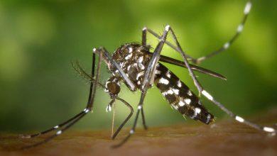 ویروس چیکونگونیا